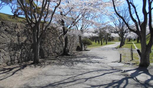 五稜郭公園の桜と六花亭のマルセイバターサンド